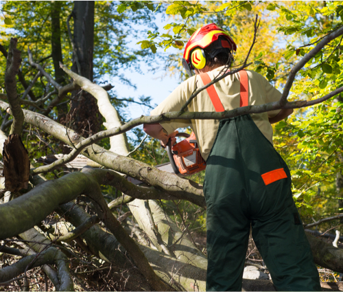 tree evacuation administration